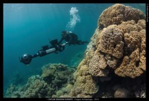Chagos ben big coral
