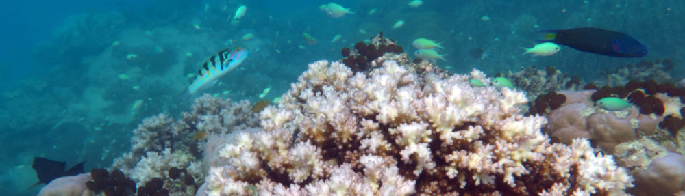 Coral Reef Ecosystems Lab
